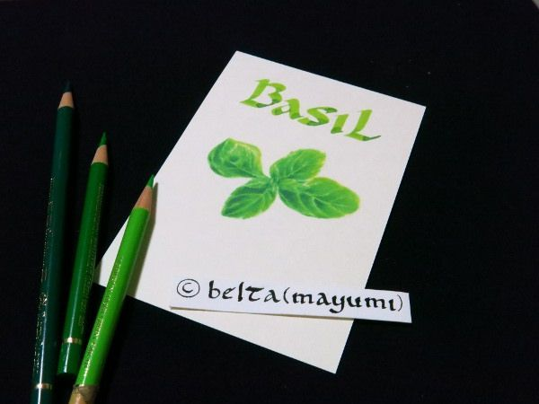 basil_2014_10_24_05 I made some herb postcards for my friends who love herbs.  for this drawing I used : Faber castell polychromos Stonehenge paper  © Belta(Mayumi Wakabayashi)