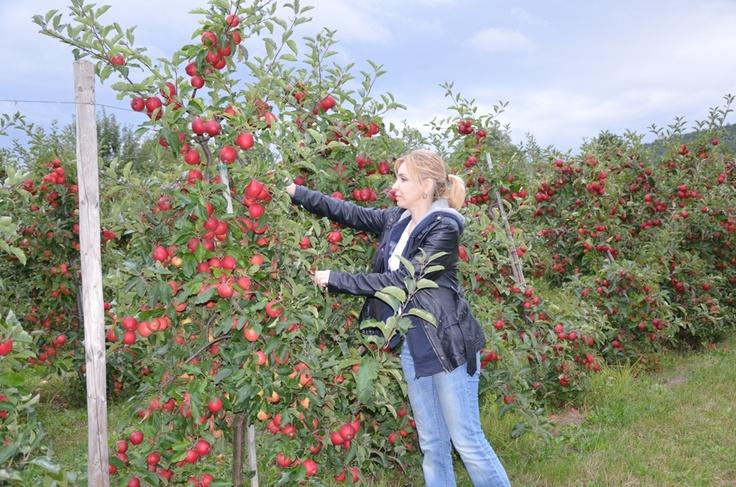 Apfel Garten in Fellbach / Fellbach'ta elma bahçesi
