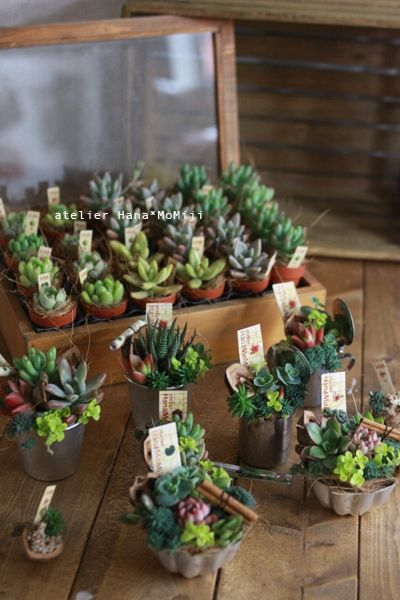 Succulents gifts botanical pinterest succulent gifts for Indoor plant gift ideas