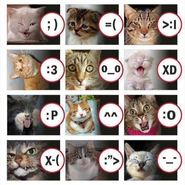 Emoticon explained, kitty style! | Cat expressions, Cats