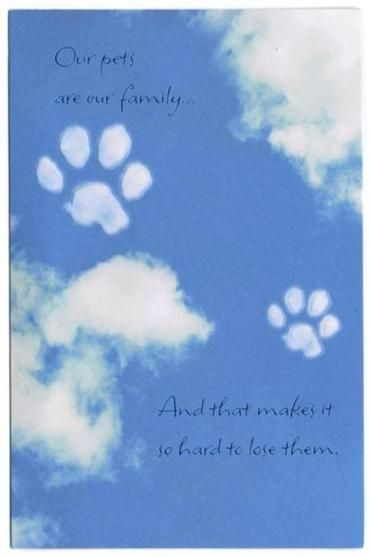 Our pets are our family...And that makes it so hard to lose them. Mourning a pet isn't what it used to be.