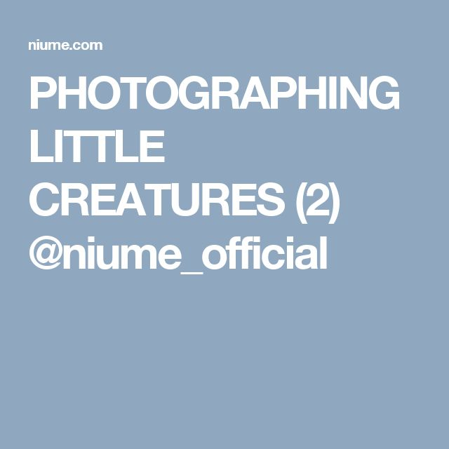 PHOTOGRAPHING LITTLE CREATURES (2) @niume_official