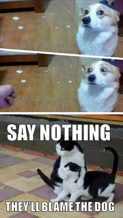 Say Nothing - They'll blame the dog! (Funny Animal Pictures) - #blame #cat #dog