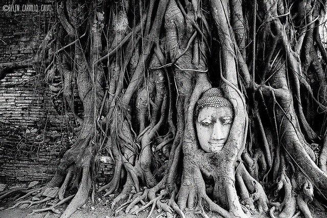 Face in tree. Belen Carrillo Calvo