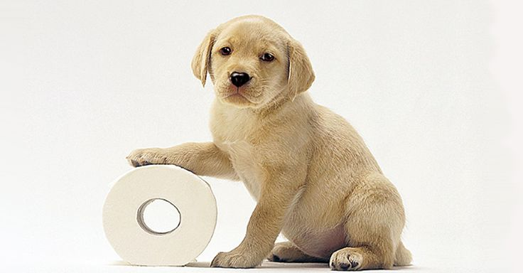 How Long Does It Take To Potty Train A Dog