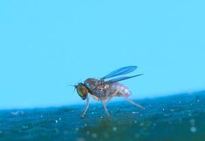 Cómo eliminar plagas de insectos y roedores sin químicos: Moscas