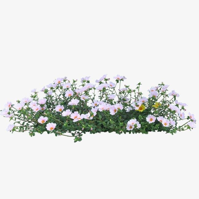 Greenery Garden Flowers Png Transparent Clipart Image And Psd File For Free Download Photoshop Landscape Flowers Landscape Architecture Graphics