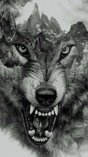 ☆ Wolf Collage.。By Eddie Yau and Illustrated By Xiong Duo ☆