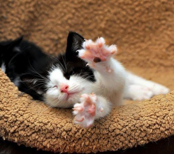 Kitteh stretching in the am. Precious!!! cute-n-cuddly