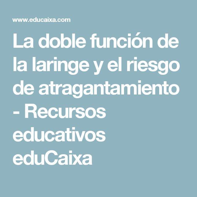 La doble función de la laringe y el riesgo de atragantamiento - Recursos educativos eduCaixa