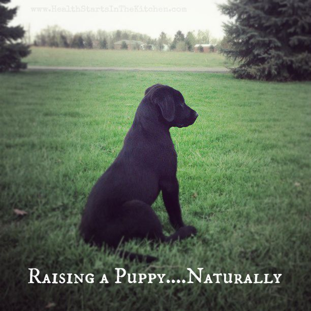 Raising a puppy naturally