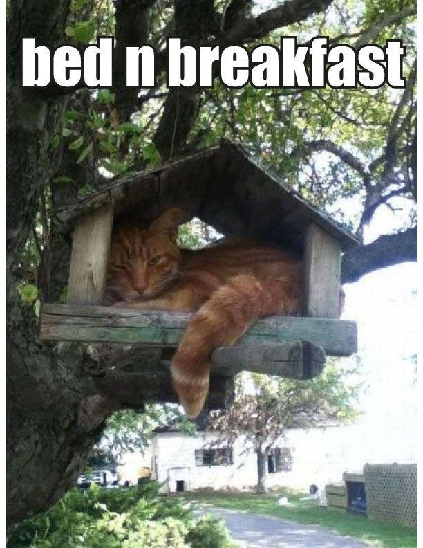Bed n breakfast cat bird house cat memes kitty cat humor funny joke gato chat captions feline la original