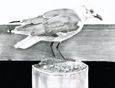 Darken features like the eye, beak, and legs to make them stand out sharply. | www.drawing-made-easy.com |
