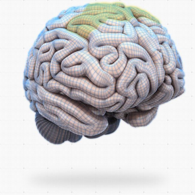 interactive brain anatomy software
