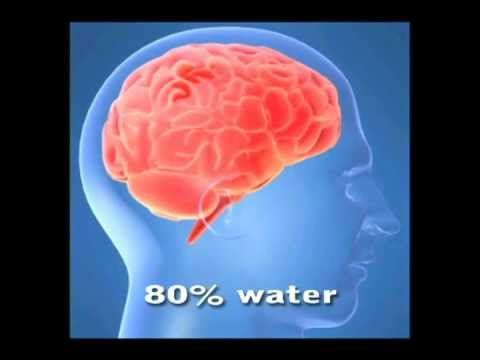 Water and the Human Body - YouTube
