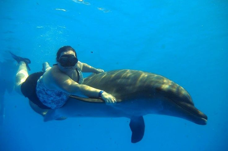 Under water swim with 1 dolphin, half the width of the pool