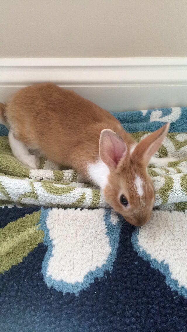 Das süßeste Kaninchen aller Zeiten !!! –  #aller #das #kaninchen #süßeste #zeiten