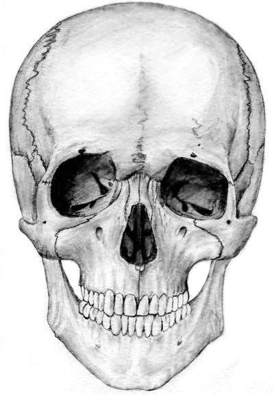 рисунок черепа графика - Поиск в Google