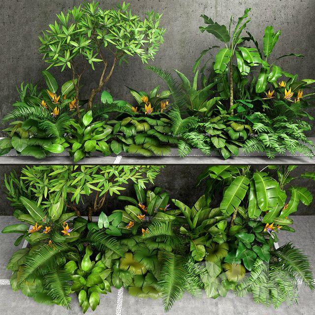 Tropic Tropical Herbs Plants