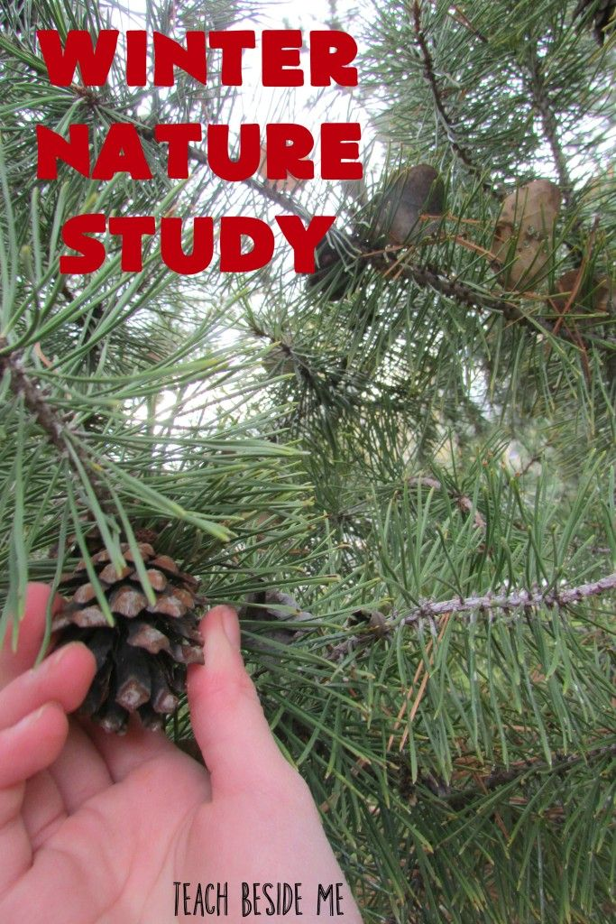 fir letter format%0A Winter Nature Study  Keep the kids learning and entertained during winter  break with fun and