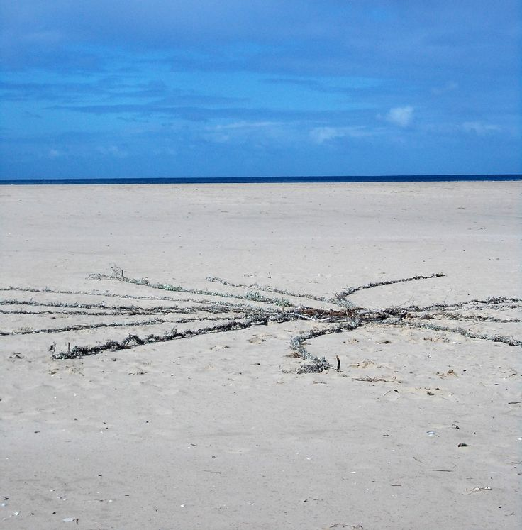 Kooigoed gathered from  hills to and woven into rope mandala. Weaving 'Hope' on lookout Beach 15 August 2013 at  the second #LandArtBiennale in Plett.