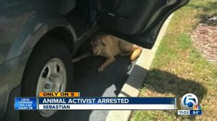 A man that's dedicated his life to animal advocacy and rescue now faces misdemeanor 2nd-degree petit theft charges and jail time for doing exactly what any one of us would have done – saving a dog's life. Indian River County S.P.C.A. President Van DeMars was visiting a South Florida Publix Supermarket when he spotted a dog in distress. The dog was tethered to the an SUV, sitting on the scorching hot asphalt while temperatures outside soared to about 90-degrees.