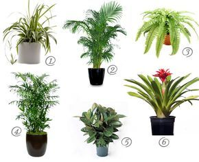 1000 ideas about bamboo palm on pinterest humidifier for Areca palm safe for cats