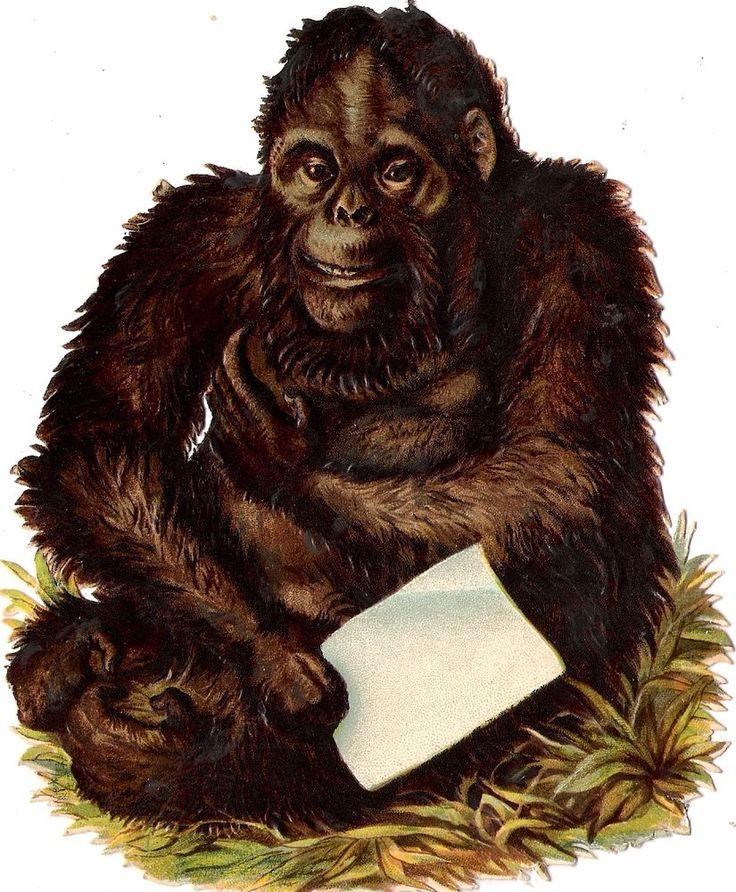 Oblaten Glanzbild scrap die cut chromo Gorilla 14,4cm Orang utan Affe monkey