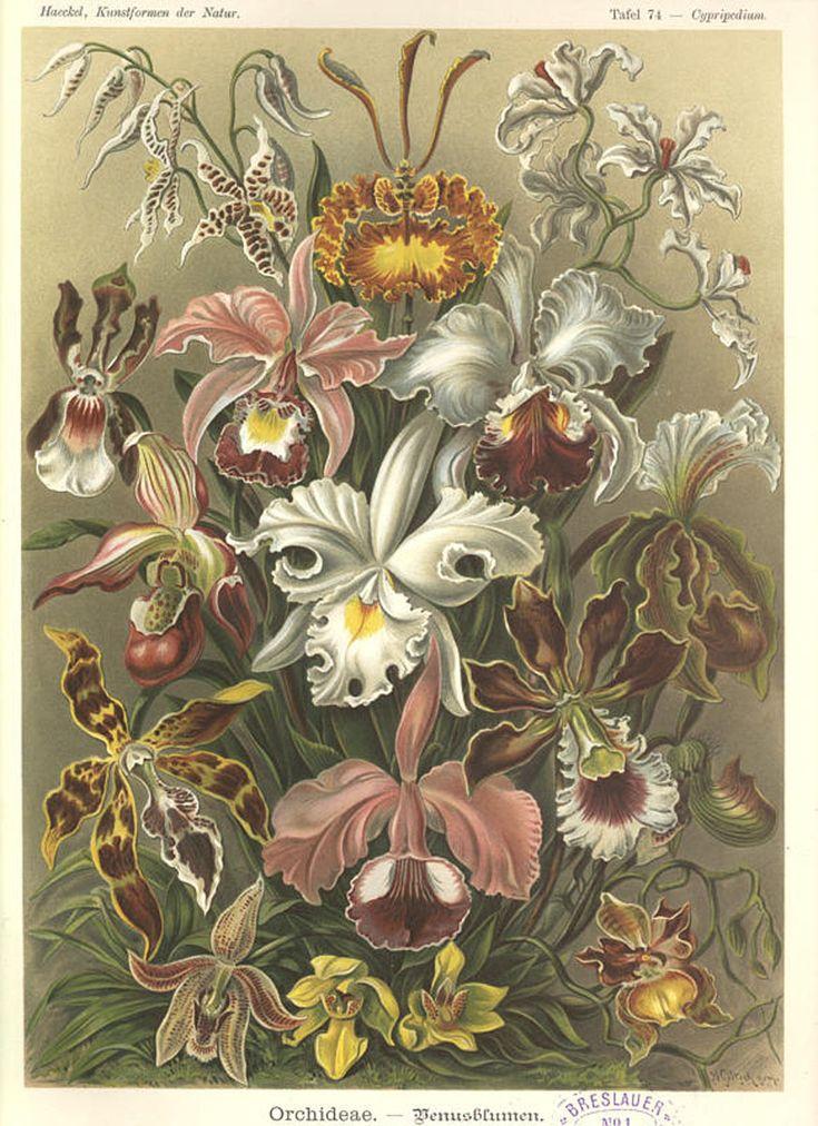 Arte de la Naturaleza (1900)
