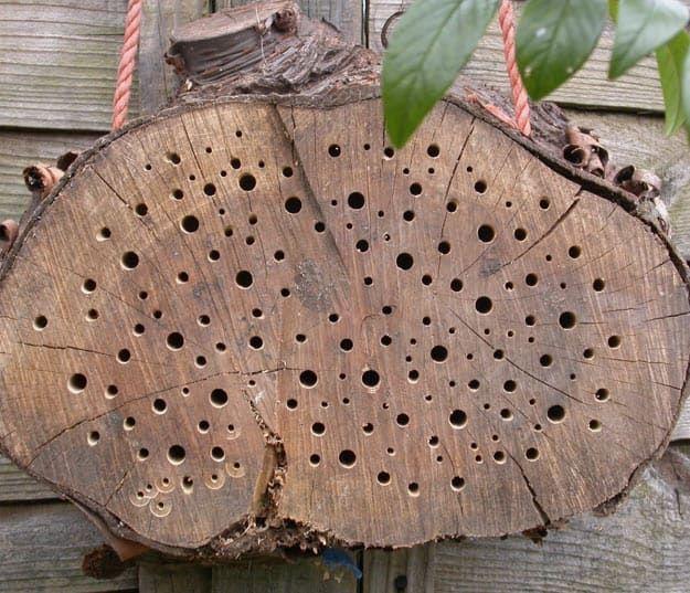 DIY A Tree Stump Bee Hive |  Arı Kovanı, Ev Çiftliğiniz İçin Planlıyor