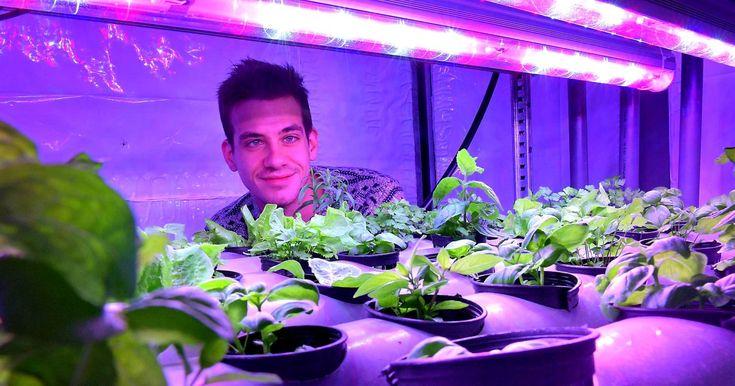 """""""Sa ferme ne fait que 13 m², mais elle peut contenir jusqu'à 15 000 végétaux.""""... http://www.leparisien.fr/bretagne/bretagne-ses-plantes-poussent-sans-terre-ni-soleil-29-05-2017-6993003.php"""