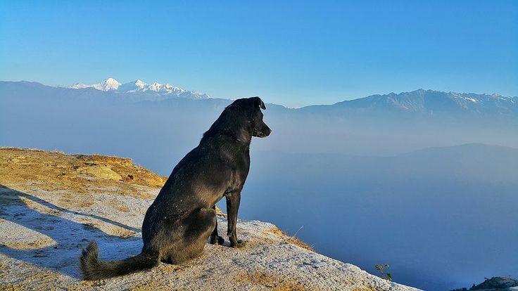 Landschaft, Hund, Im Freien