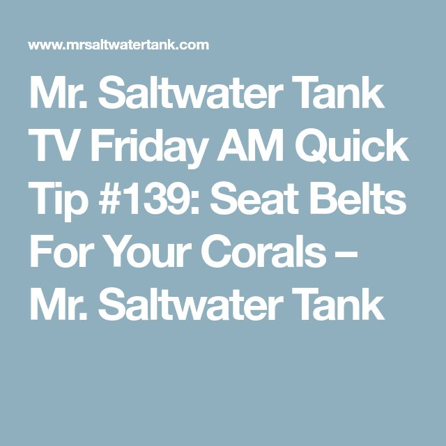 Mr. Saltwater Tank TV Friday AM Quick Tip #139: Seat Belts For Your Corals – Mr. Saltwater Tank
