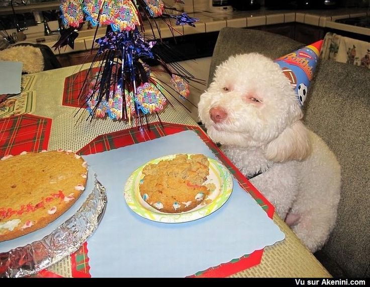 Un chien fête son anniversaire ! - A dog celebrates his birthday!
