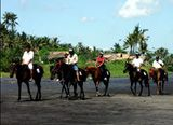What to Do in Bali | Viceroy 5 Star Luxury Hotel Bali | Activities Horse Riding, Harley Davidson Tours or rental, Golfing Days,