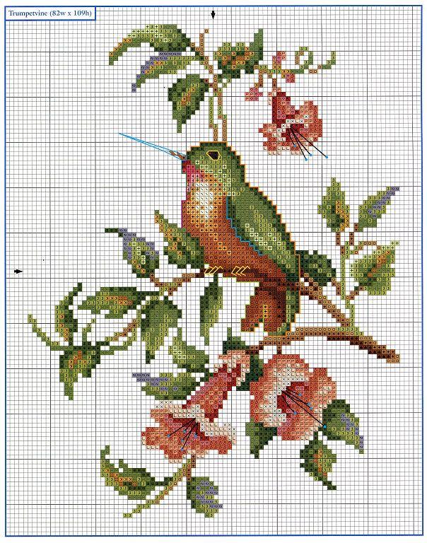 ♥ hummingbird