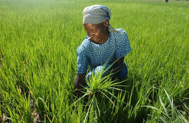 Día Internacional de la Mujer Rural. Campesina.