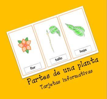 Tarjetas informativas sobre las partes de una planta. Contiene la imagen y la descripción de las partes de una planta.
