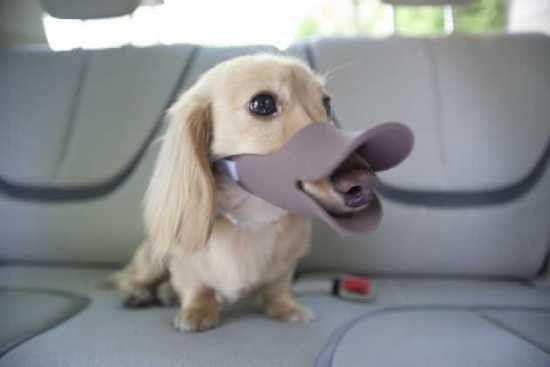 Museruola umiliante per cani