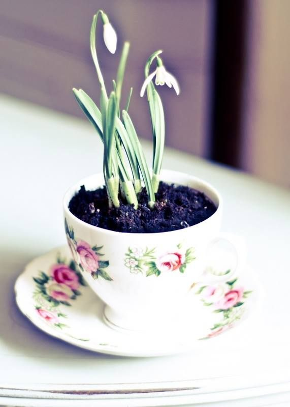 flower pot made of cup