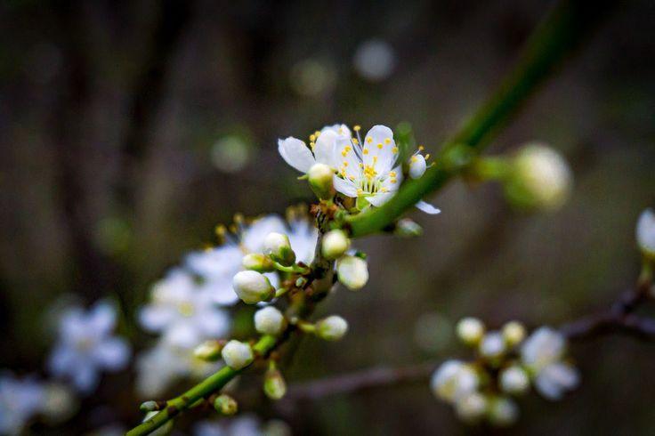 Spring Flowers | by rikkechemnitzphotos