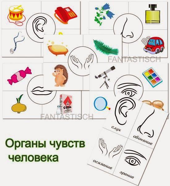 Играем до школы: Дидактическая игра для детей Органы чувств человек...
