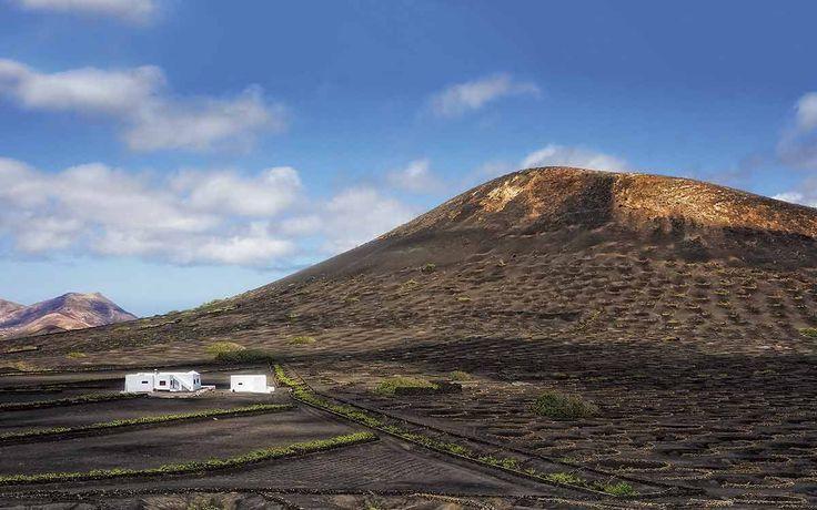 La Geria  Este paisaje agrícola es único en el mundo. Cada vid se planta en el fondo de un hoyo y se protege con «rofe», cenizas volcánicas que retienen la humedad. Una medialuna de piedras la resguardará del viento. Lanzarote. Islas Canarias
