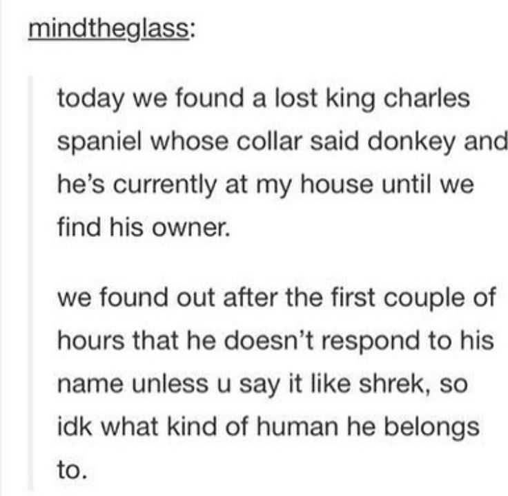 Haha dogs name is Donkey but he doesn't respond until you say it like Shrek
