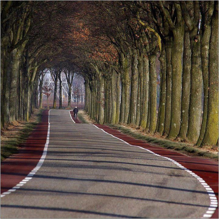 • Limburg, Netherlands looks like the road to paradise.
