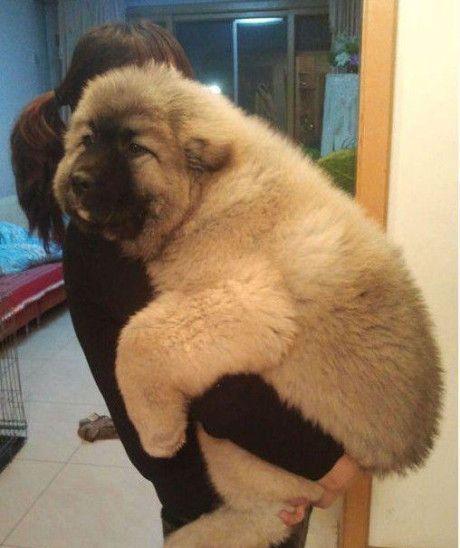 Awww! Looks like a teddy bear!
