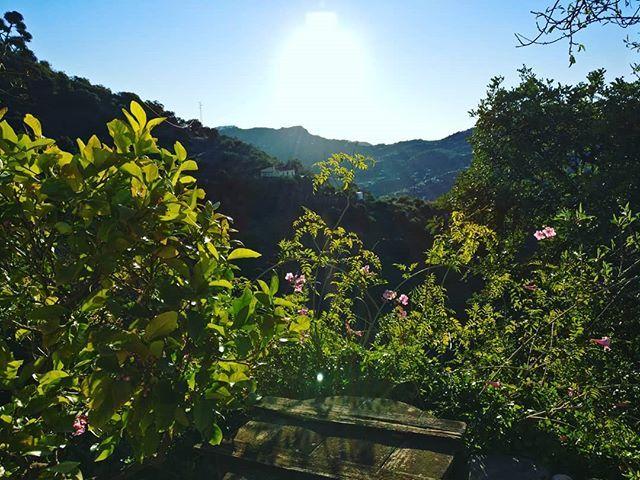 #hello #world !!! #weather #beautiful #skylovers #day #summer #love #twilight #light #sky #dusk #clouds #flowers #pretty #sun #green #tagsforlikes #red #TFLers #sunset #tree #blue #mothernature #beauty #sunrise #nature #photooftheday
