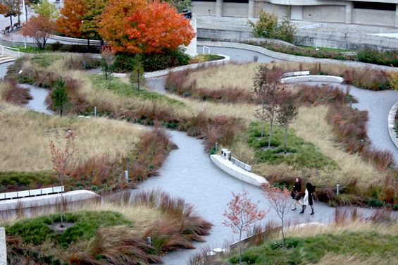 1000  images about prairie landscape design on pinterest