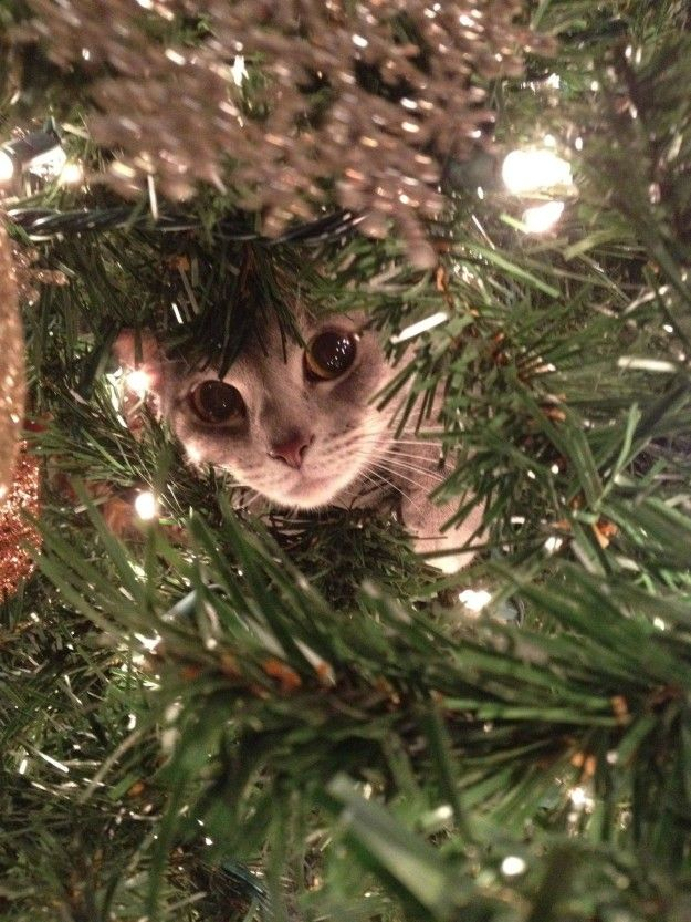 """I'm just making sure there aren't any presents hiding in here."" 