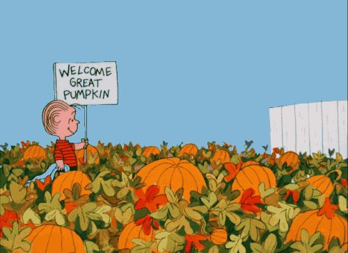 Exceptional Pumpkins, Leaves, Sunsets And Frights. Capture Your Best Halloween Themed  GIF For